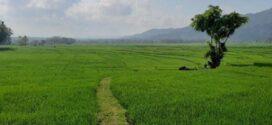 Wabup Pati Ingin TKI di Korea Selatan Serap Ketrampilan Bidang Pertanian